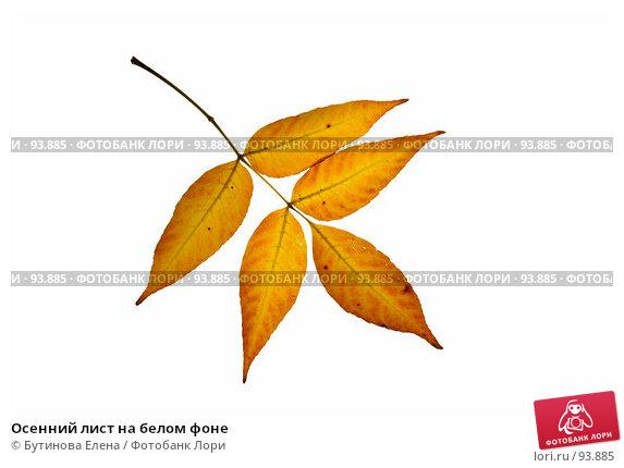 Осенний лист на белом фоне, фото № 93885, снято 6 октября 2007 г. (c) Бутинова Елена / Фотобанк Лори