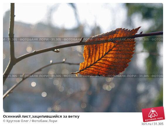 Осенний лист,зацепившийся за ветку, фото № 31305, снято 4 ноября 2006 г. (c) Круглов Олег / Фотобанк Лори