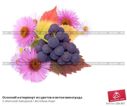 Осенний натюрморт из цветов и ветки винограда, фото № 266861, снято 1 октября 2006 г. (c) Анатолий Заводсков / Фотобанк Лори