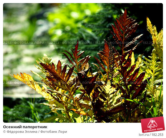 Осенний папоротник, фото № 182253, снято 28 июля 2017 г. (c) Фёдорова Эллина / Фотобанк Лори