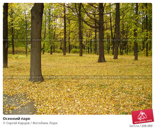 Купить «Осенний парк», фото № 208989, снято 1 октября 2005 г. (c) Сергей Карцов / Фотобанк Лори