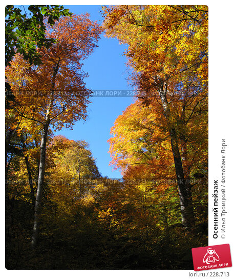 Осенний пейзаж, фото № 228713, снято 10 декабря 2016 г. (c) Илья Троицкий / Фотобанк Лори
