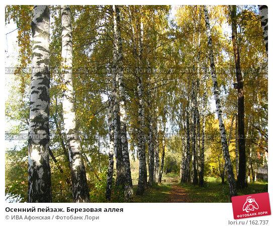 Осенний пейзаж. Березовая аллея, фото № 162737, снято 8 октября 2006 г. (c) ИВА Афонская / Фотобанк Лори