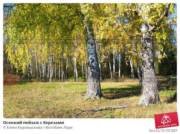 Купить «Осенний пейзаж с березами», эксклюзивное фото № 5131837, снято 6 октября 2013 г. (c) Елена Коромыслова / Фотобанк Лори