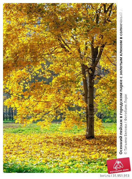Купить «Осенний пейзаж в городском парке с золотым кленом в солнечный день», фото № 31951913, снято 17 октября 2017 г. (c) Татьяна Белова / Фотобанк Лори