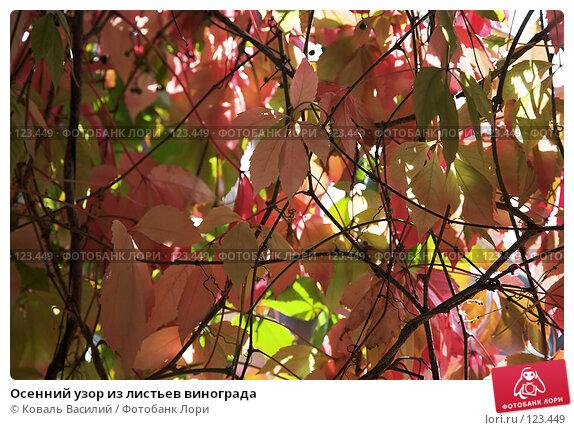 Купить «Осенний узор из листьев винограда», фото № 123449, снято 17 сентября 2006 г. (c) Коваль Василий / Фотобанк Лори
