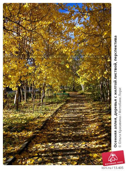 Осенняя аллея, деревья с желтой листвой, перспектива, фото № 13405, снято 21 сентября 2006 г. (c) Ольга Красавина / Фотобанк Лори