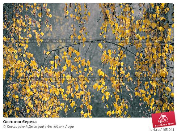 Осенняя береза, фото № 165041, снято 28 октября 2007 г. (c) Кондорский Дмитрий / Фотобанк Лори