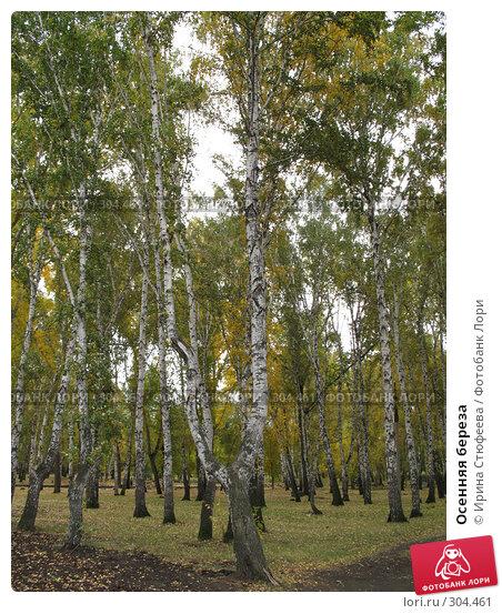 Осенняя береза, фото № 304461, снято 30 сентября 2007 г. (c) Ирина Стюфеева / Фотобанк Лори