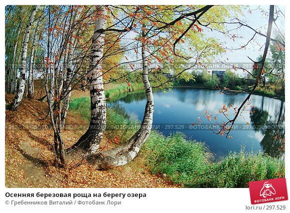 Осенняя березовая роща на берегу озера, фото № 297529, снято 26 июля 2017 г. (c) Гребенников Виталий / Фотобанк Лори