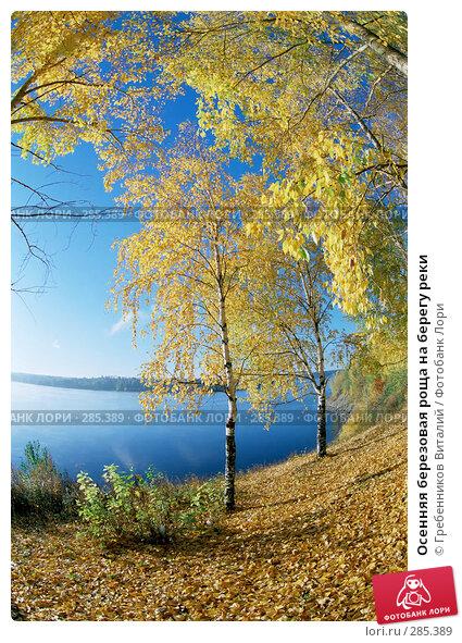 Осенняя березовая роща на берегу реки, фото № 285389, снято 25 мая 2017 г. (c) Гребенников Виталий / Фотобанк Лори