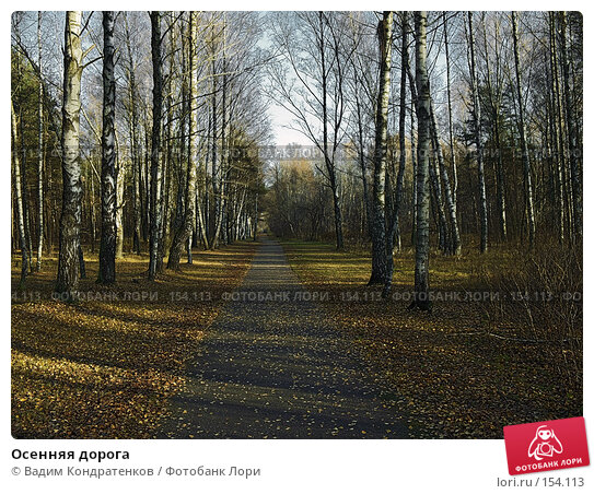 Купить «Осенняя дорога», фото № 154113, снято 17 марта 2018 г. (c) Вадим Кондратенков / Фотобанк Лори