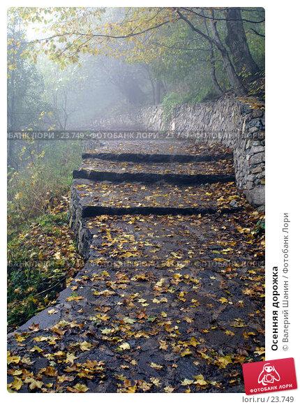 Осенняя дорожка, фото № 23749, снято 27 октября 2006 г. (c) Валерий Шанин / Фотобанк Лори