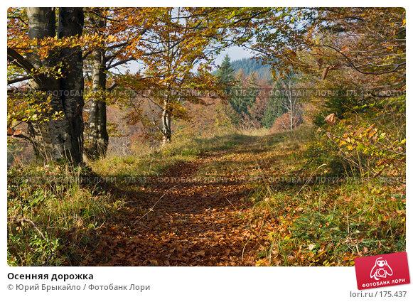 Осенняя дорожка, фото № 175437, снято 5 октября 2007 г. (c) Юрий Брыкайло / Фотобанк Лори