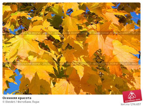 Осенняя красота, фото № 216657, снято 17 января 2017 г. (c) ElenArt / Фотобанк Лори