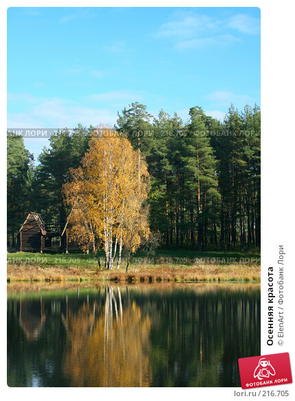 Осенняя красота, фото № 216705, снято 28 февраля 2017 г. (c) ElenArt / Фотобанк Лори
