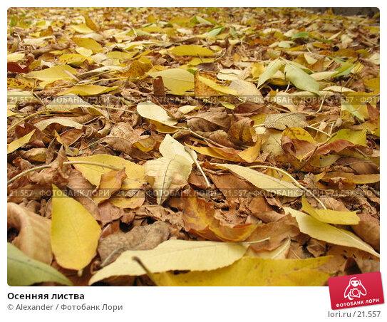 Осенняя листва, фото № 21557, снято 2 октября 2006 г. (c) Alexander / Фотобанк Лори