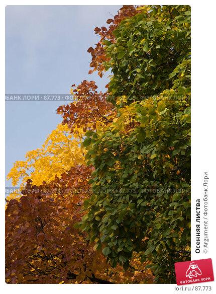 Купить «Осенняя листва», фото № 87773, снято 24 сентября 2007 г. (c) Argument / Фотобанк Лори