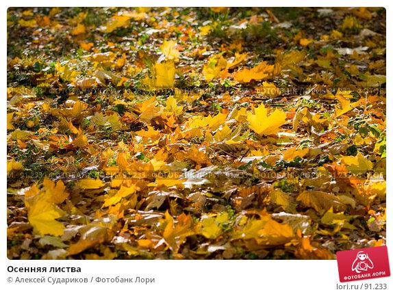 Купить «Осенняя листва», фото № 91233, снято 1 октября 2007 г. (c) Алексей Судариков / Фотобанк Лори