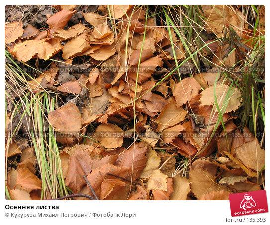 Осенняя листва, фото № 135393, снято 15 сентября 2007 г. (c) Кукуруза Михаил Петрович / Фотобанк Лори