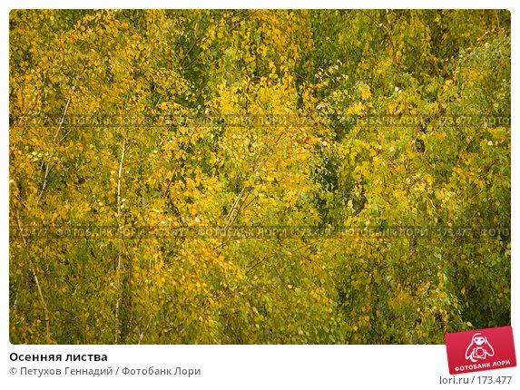Осенняя листва, фото № 173477, снято 23 октября 2007 г. (c) Петухов Геннадий / Фотобанк Лори