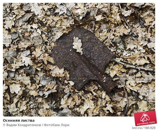 Осенняя листва, фото № 180929, снято 29 мая 2017 г. (c) Вадим Кондратенков / Фотобанк Лори