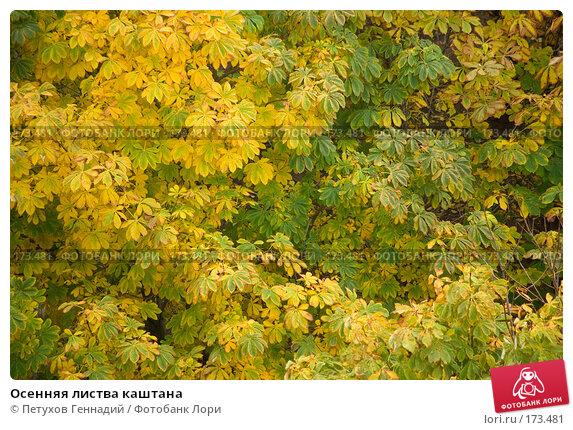 Осенняя листва каштана, фото № 173481, снято 23 октября 2007 г. (c) Петухов Геннадий / Фотобанк Лори