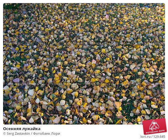 Купить «Осенняя лужайка», фото № 129645, снято 7 октября 2004 г. (c) Serg Zastavkin / Фотобанк Лори