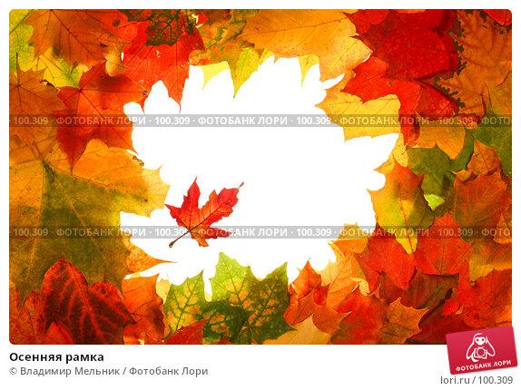 Осенняя рамка, фото № 100309, снято 4 октября 2007 г. (c) Владимир Мельник / Фотобанк Лори