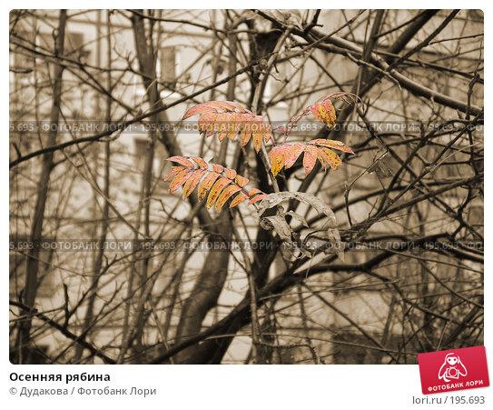 Купить «Осенняя рябина», фото № 195693, снято 22 октября 2003 г. (c) Дудакова / Фотобанк Лори