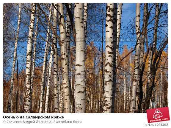 Купить «Осенью на Салаирском кряже», фото № 203065, снято 13 октября 2007 г. (c) Селигеев Андрей Иванович / Фотобанк Лори