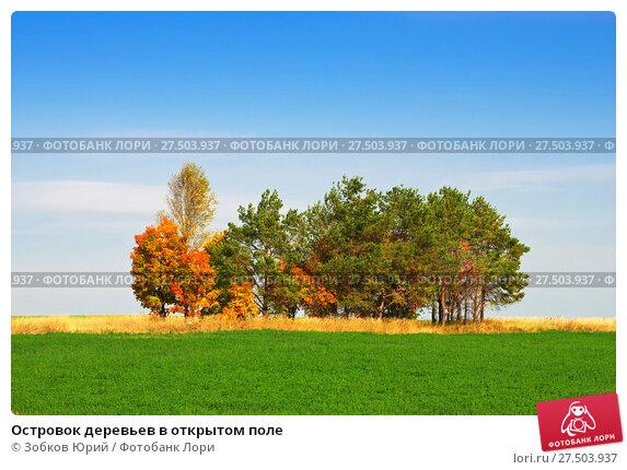 Купить «Островок деревьев в открытом поле», фото № 27503937, снято 19 сентября 2014 г. (c) Зобков Георгий / Фотобанк Лори