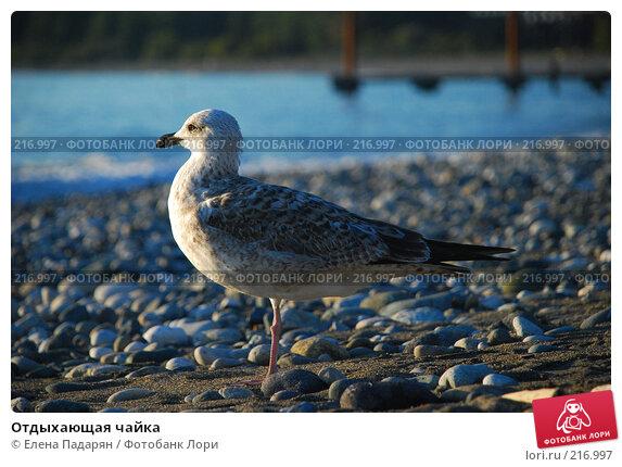 Отдыхающая чайка, фото № 216997, снято 18 октября 2007 г. (c) Елена Падарян / Фотобанк Лори