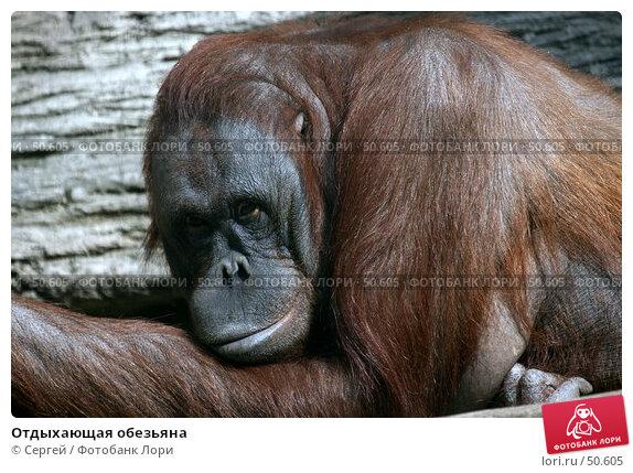 Отдыхающая обезьяна, фото № 50605, снято 6 июня 2007 г. (c) Сергей / Фотобанк Лори