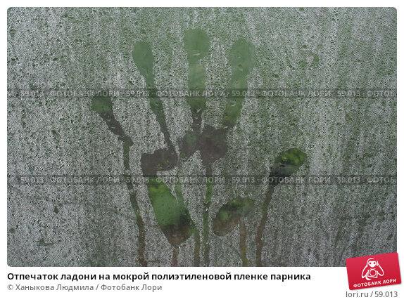 Отпечаток ладони на мокрой полиэтиленовой пленке парника, фото № 59013, снято 7 июля 2007 г. (c) Ханыкова Людмила / Фотобанк Лори