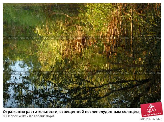 Отражения растительности, освещенной послеполуденным солнцем, в тихой воде лесного озера, фото № 37569, снято 21 мая 2007 г. (c) Eleanor Wilks / Фотобанк Лори