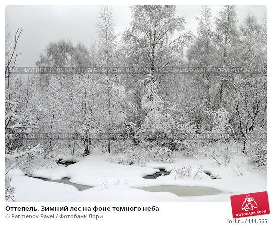 Оттепель. Зимний лес на фоне темного неба, фото № 111565, снято 15 февраля 2007 г. (c) Parmenov Pavel / Фотобанк Лори