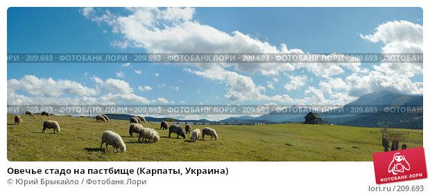 Овечье стадо на пастбище (Карпаты, Украина), фото № 209693, снято 20 января 2017 г. (c) Юрий Брыкайло / Фотобанк Лори