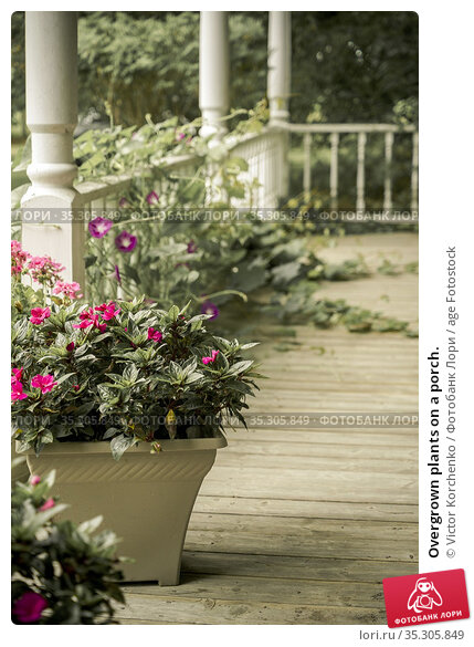 Overgrown plants on a porch. Стоковое фото, фотограф Victor Korchenko / age Fotostock / Фотобанк Лори