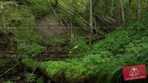 Купить «Overgrowth ravine in the forest», видеоролик № 26812153, снято 27 августа 2017 г. (c) Антон Гвоздиков / Фотобанк Лори