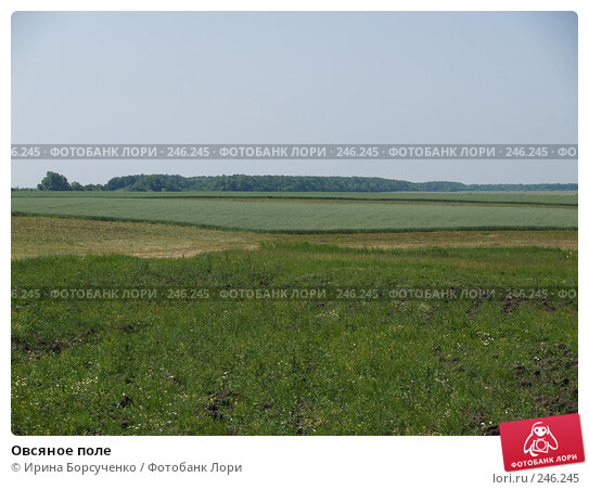Овсяное поле, фото № 246245, снято 17 июня 2007 г. (c) Ирина Борсученко / Фотобанк Лори
