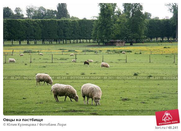 Овцы на пастбище, фото № 48241, снято 9 мая 2007 г. (c) Юлия Кузнецова / Фотобанк Лори