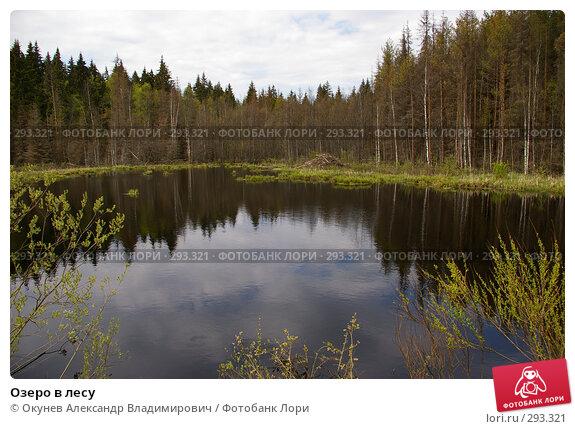 Озеро в лесу, фото № 293321, снято 10 мая 2008 г. (c) Окунев Александр Владимирович / Фотобанк Лори