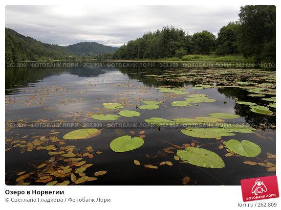 Озеро в Норвегии, фото № 262809, снято 6 августа 2006 г. (c) Cветлана Гладкова / Фотобанк Лори