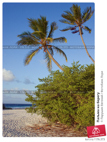 Пальма на берегу, фото № 176373, снято 23 января 2017 г. (c) Парушин Евгений / Фотобанк Лори