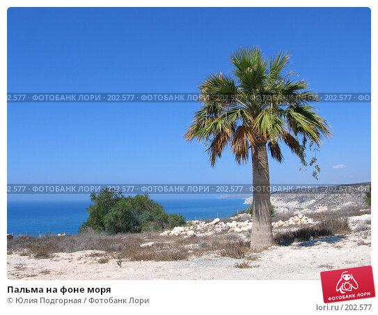 Пальма на фоне моря, фото № 202577, снято 9 августа 2006 г. (c) Юлия Селезнева / Фотобанк Лори