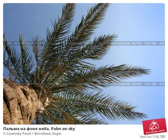 Купить «Пальма на фоне неба. Palm on sky», фото № 116785, снято 7 января 2006 г. (c) Losevsky Pavel / Фотобанк Лори