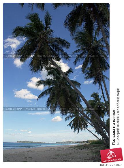 Купить «Пальмы на пляже», фото № 75869, снято 30 мая 2007 г. (c) Валерий Шанин / Фотобанк Лори
