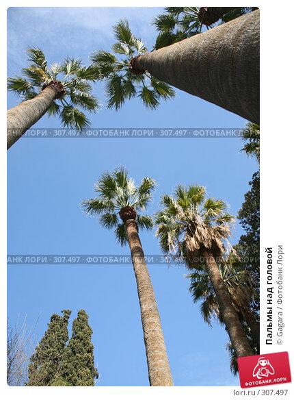 Пальмы над головой, фото № 307497, снято 11 марта 2008 г. (c) Gagara / Фотобанк Лори