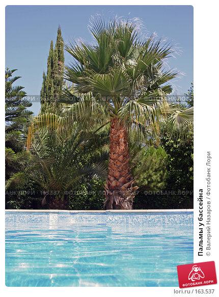 Пальмы у бассейна, фото № 163537, снято 21 августа 2007 г. (c) Валерий Торопов / Фотобанк Лори